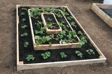 Tiered Strawberry Planter Plans by How To Build A Strawberry Bed Pictures Of Strawberry