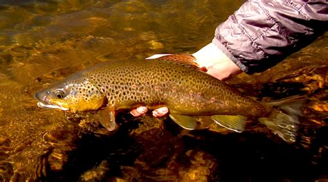 fly fishing tips archives colorado fly fishing tips archives colorado fly fishing
