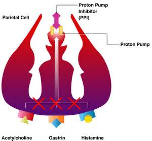Proton Inhibition Proton Pumps H