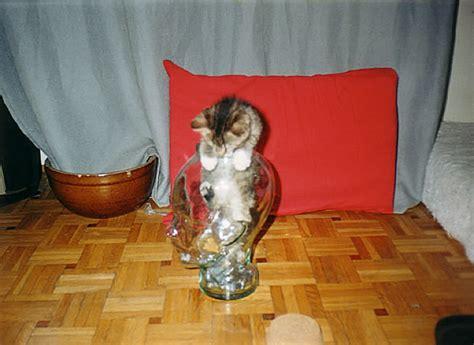 bonsai kitten 02