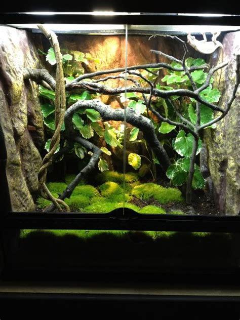 exo terra setup chameleon forums  arboreal critter
