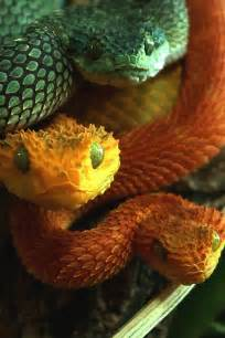 colorful snakes colorful snake trio ssssss snakes