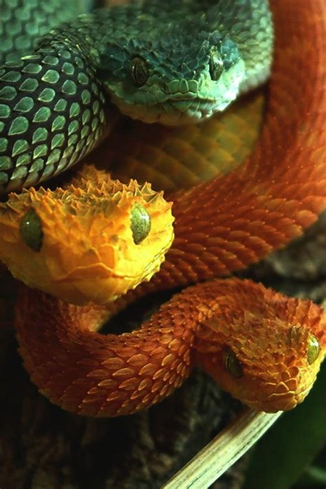 colorful snake colorful snake trio ssssss snakes
