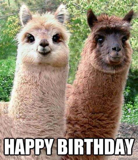have a llama fun happy birthday happy birthday llama