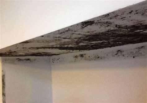 eliminare la muffa dai muri interni eliminare l umidit 224 capillare dai muri