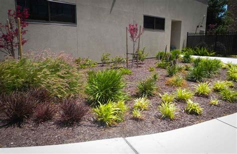 Drought Landscaping Ideas Drought Tolerant Landscaping Ideas Affordable Size Of Marvellous Sloped Landscaping Ideas