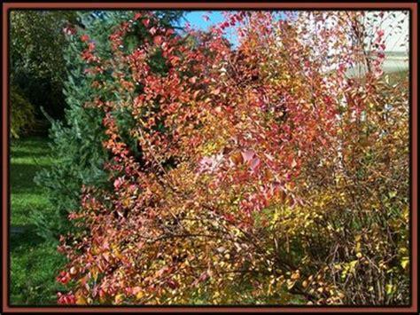 Garten November by Neues Vom Lindenhof Der Garten Im November The Garden