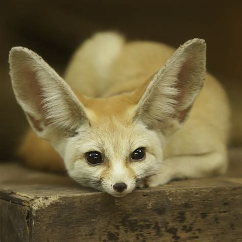 exotic animals  sale   united states page