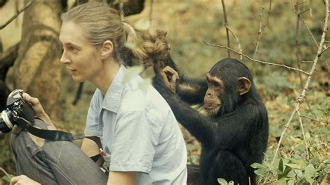 jane goodall biography in spanish newsela chimpanzee expert a child s fascination leads