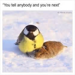 Funny What Memes - 15 funny memes by tank sinatra bored panda