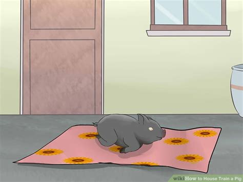 can you house train a pig 3 ways to house train a pig wikihow