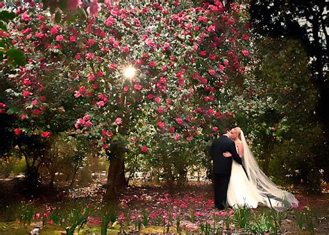 Magnolia Garden by Magnolia Plantation Wedding Venue Charleston Sc Diana Deaver Weddings