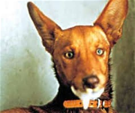 how often do dogs get rabies why do with rabies a fear of water quora