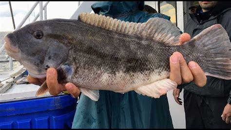party boat fishing belmar nj party boat blackfish tautog fishing belmar nj ocean
