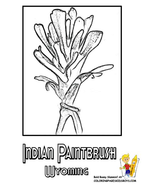 coloring page indian paintbrush usa flower coloring pages penn wyoming usa islands