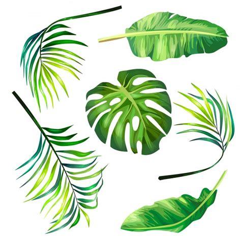 wallpaper daun palma palm tree vectors photos and psd files free download