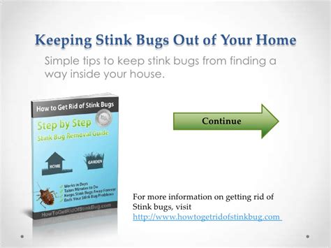 how to keep stink bugs out of your house how to keep stink bugs out of your house 28 images how to keep water bugs out of your house
