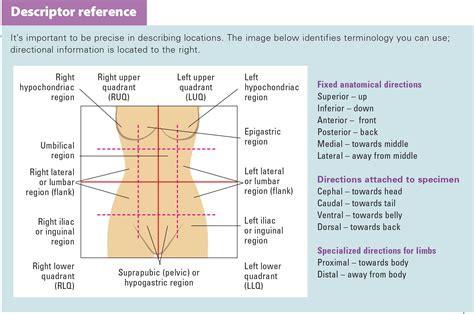 ileostomy diagram how to change a colostomy bag diagram style guru