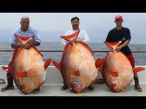 big fishes of the world lucky anglers catch three