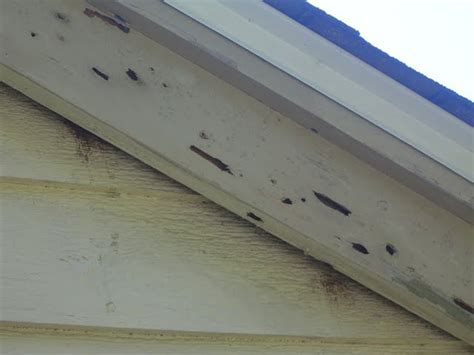 woodpecker damage to house siding woodpecker house damage
