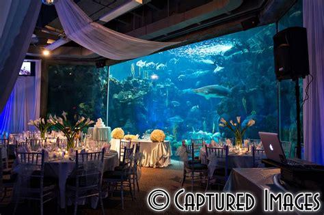 wedding reception new aquarium aquarium wedding reception purple and blue wedding reception decor maybe one day