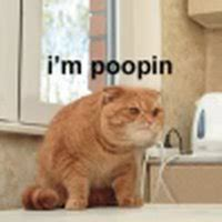 How To Stop A Cat From Pooping On The Floor by Cat Pooping Pictures Images Photos Photobucket