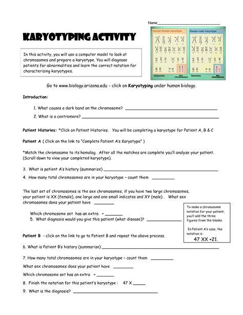 biology karyotype worksheet answers karyotype activity worksheet worksheets for school getadating