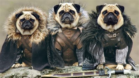pug of thrones pugs as of thrones characters free radio