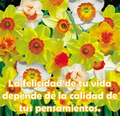 imagenes con frases lindas para toda ocasion im 225 genes de flores con frases bonitas para toda ocasi 243 n
