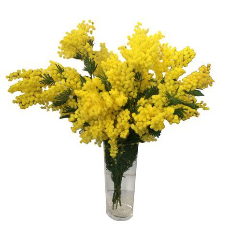 bouquet mimosa e fiori foto une promo sur la fleur du moment le mimosa plus de