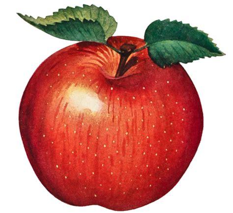 apple wallpaper transparent presentation name on emaze