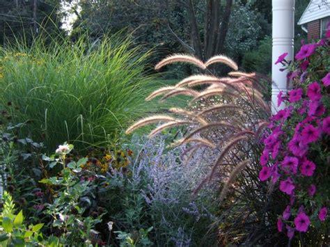 types  ornamental grasses diy