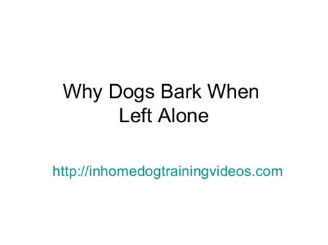 how to stop dog barking when left alone why dogs bark when left alone