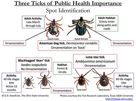 american tick diseases 2017 northeast ohio tick epidemic portage turf specialists