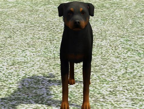 rottweiler duck rottweiler request from snowypaws nirvana kennel