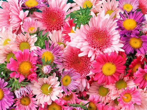 wallpaper bunga bunga hepni24 bungakembangindah