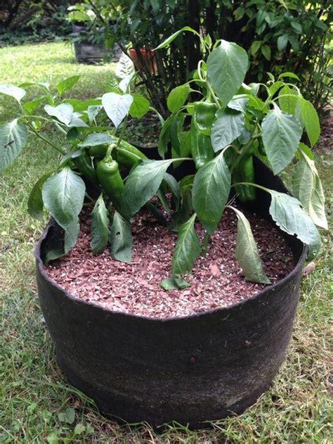 20 gallon planter smart pots can we talk