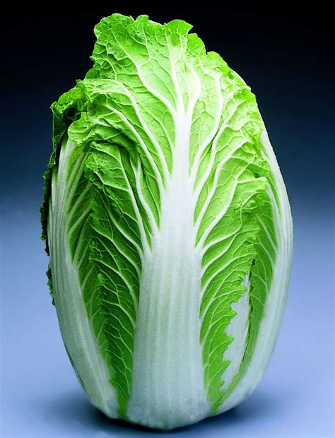 Chinese Napa Cabbage: Mild Flavor & Year Round Planting