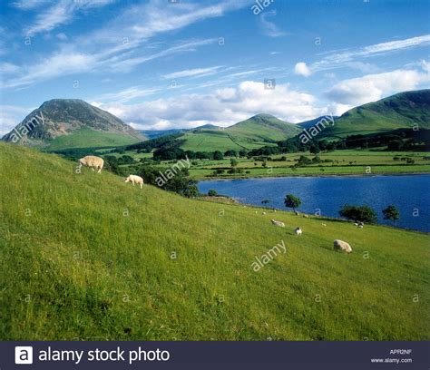 hill background sheep grazing on hill beside loweswater lake with in