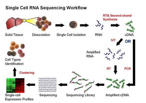 rna sequencing workflow analysis of single cell rna seq data