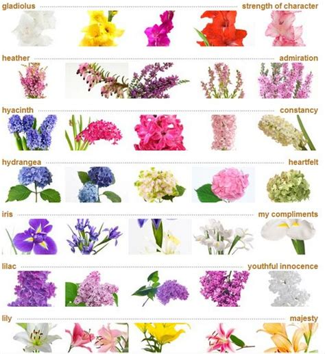 list of flowers list of flowers names