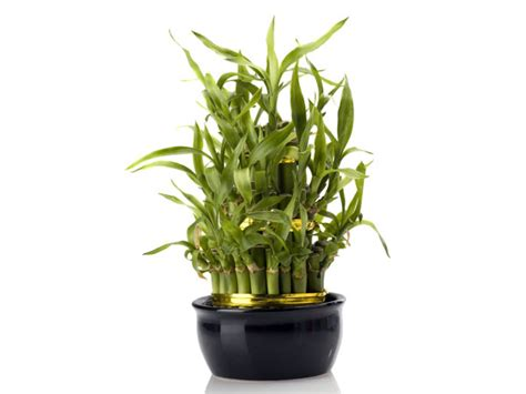 Office Desk Plant Lucky Plants For Your Office Desk Boldsky