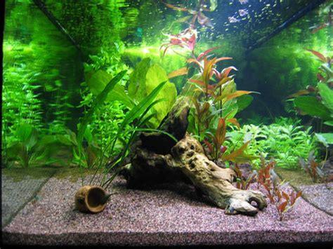 vasca per discus acquario con discus quali acquariforum