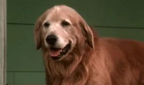 what of is chance from homeward bound shadow