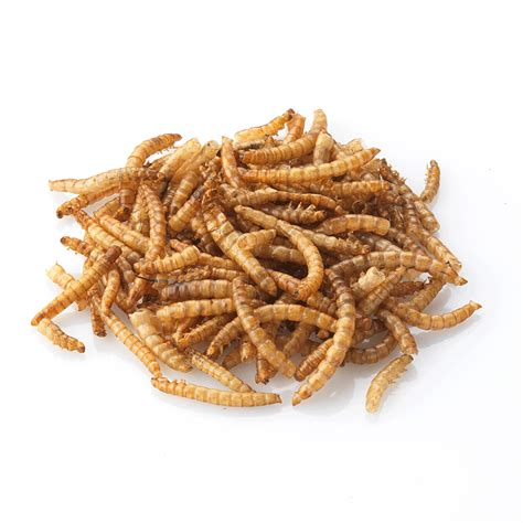 useful information to do away with mealworms onlineworldatoz