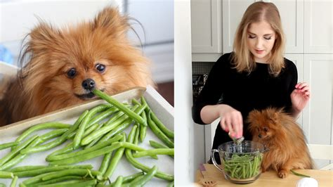 beans for dogs pankobunny green bean treats for dogs