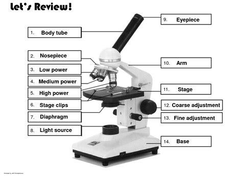 light microscope diagram diagram of the microscope parts sharkawifarm