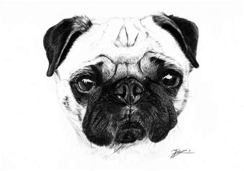 drawing a pug a pug drawing by jeanne delage