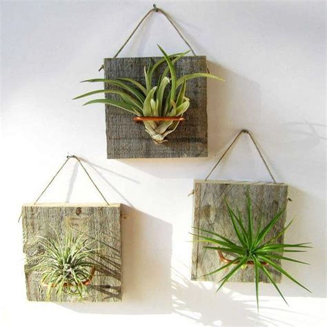 Decorating With Plants great house plants for decorating small apartments and homes