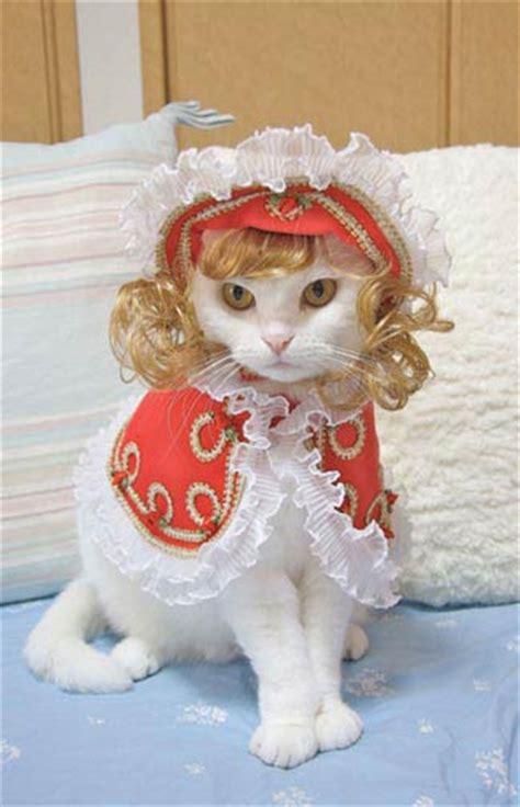 Cats Fashion fashion cats takako iwasa 9781576875575 books